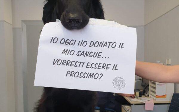 Cani e gatti possono donare il sangue: a cosa servono le trasfusioni?