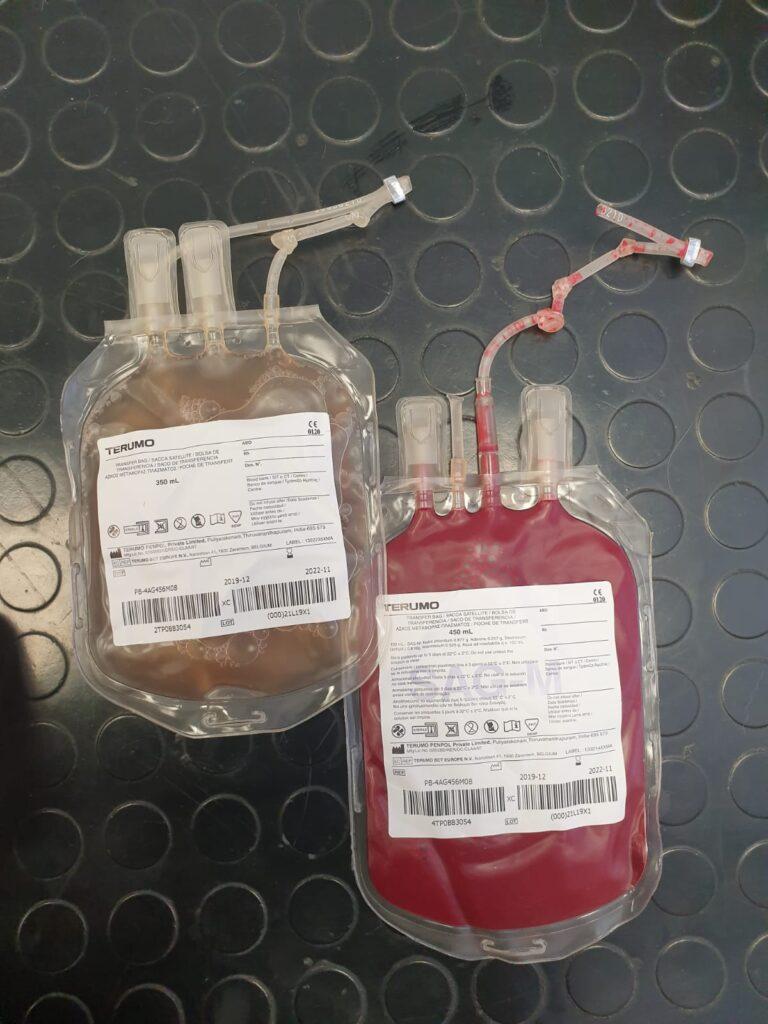 cani e gatti possono donare il sangue