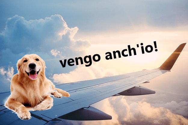 Cane in aereo: compagnie, regolamento e documenti