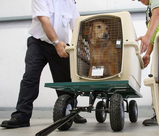 cane in aereo in stiva