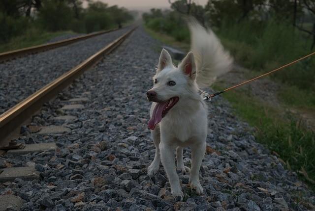 Cane in treno: regole e documenti.
