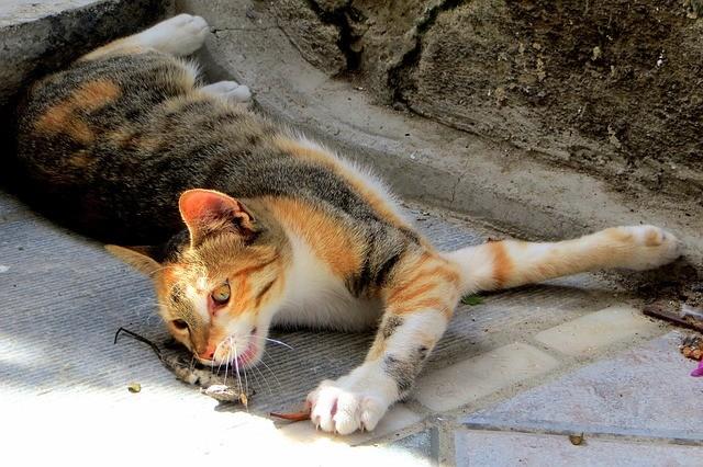 Coccidi nel cane e nel gatto: sintomi e guarigione