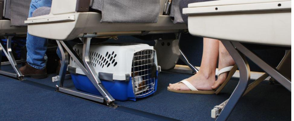 cane in aereo in cabina