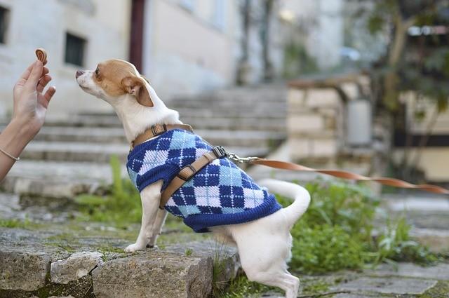 intolleranze alimentari nel cane