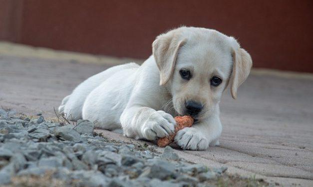 Intolleranze alimentari nel cane: come riconoscerle?