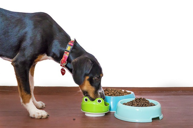 intolleranze alimentari cane