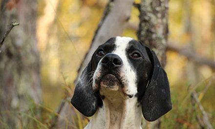 Babesiosi nel cane: sintomi, diagnosi e cura
